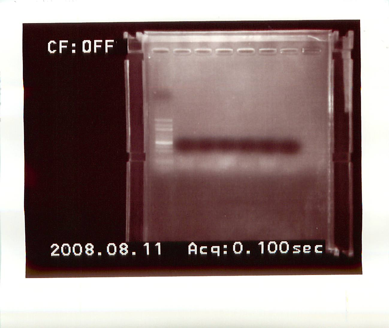 external image 20080811-01.jpg