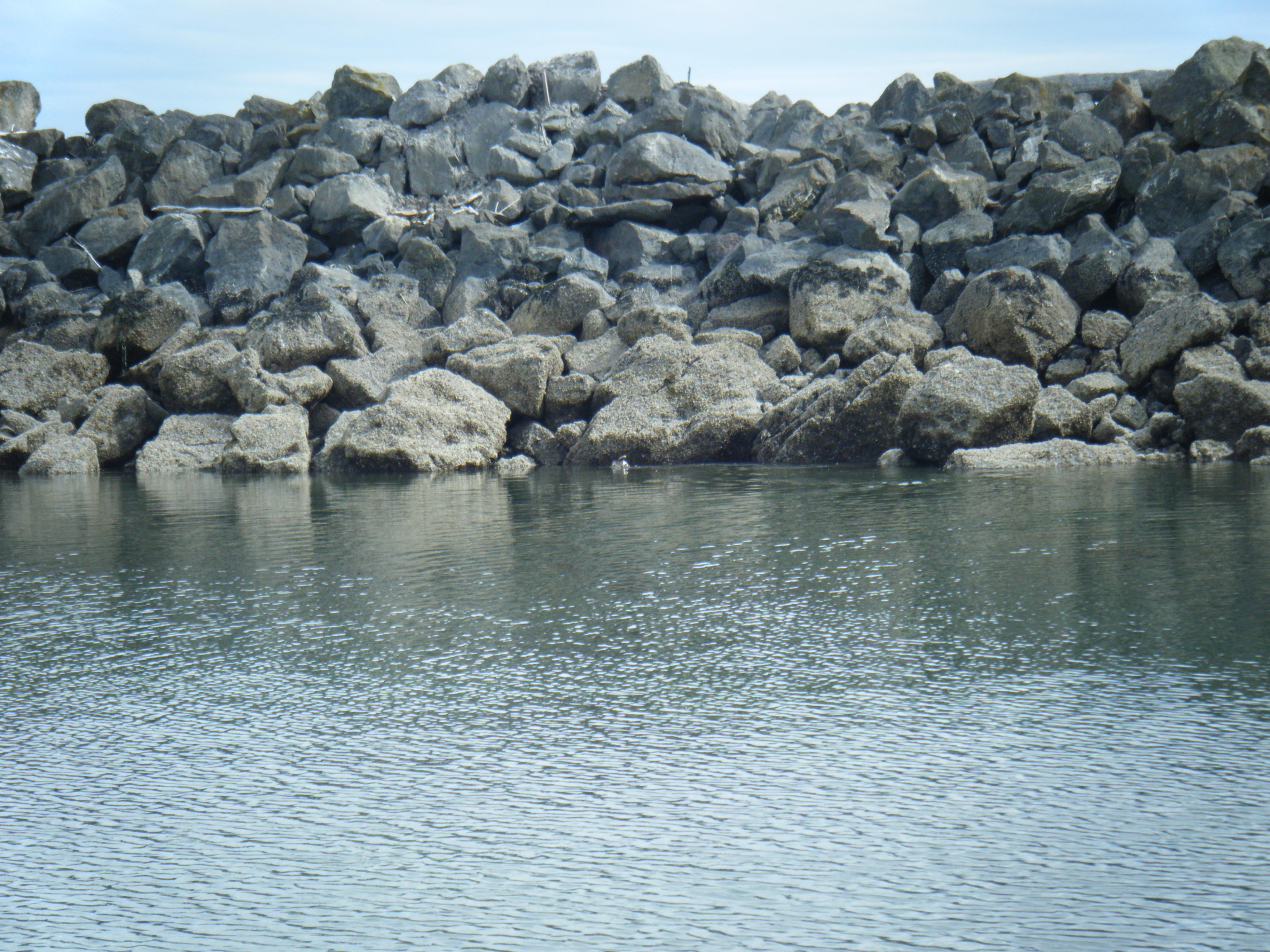 Sea Otter Captures Red Rock Crab