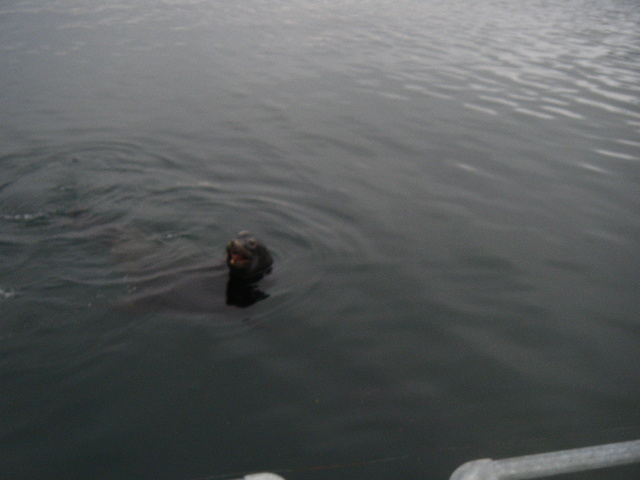 Sea Lion refusing to cooperate with Jake's commands.