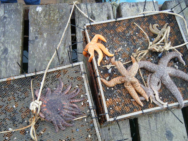 More sea stars including the super cool multileg one.