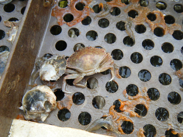 Crab found in tray.
